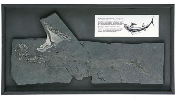The Bearsden Shark